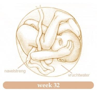 Groeikalender Week 32